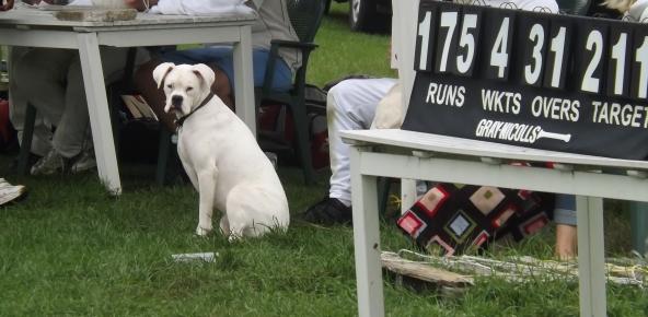 592 dog